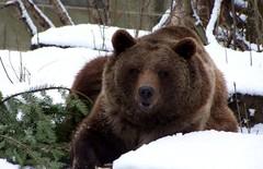 Max240_the_bears_of_bern