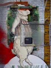 Max240_rabbitholedetail