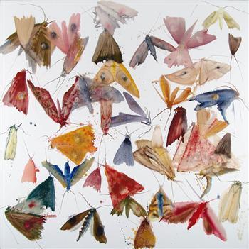 Max500_ar_moths28web