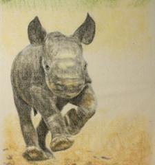 Max240_rhino