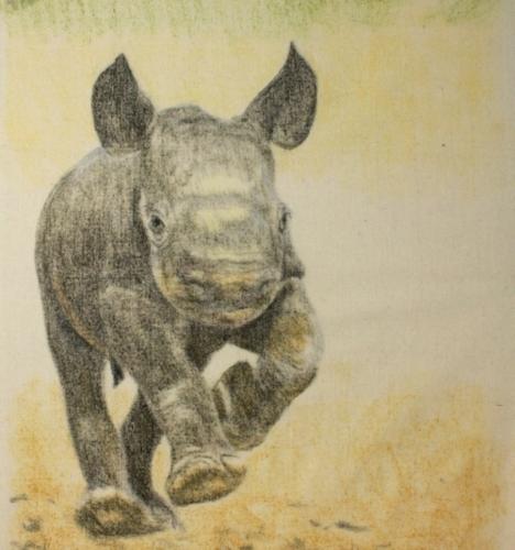 Max500_rhino