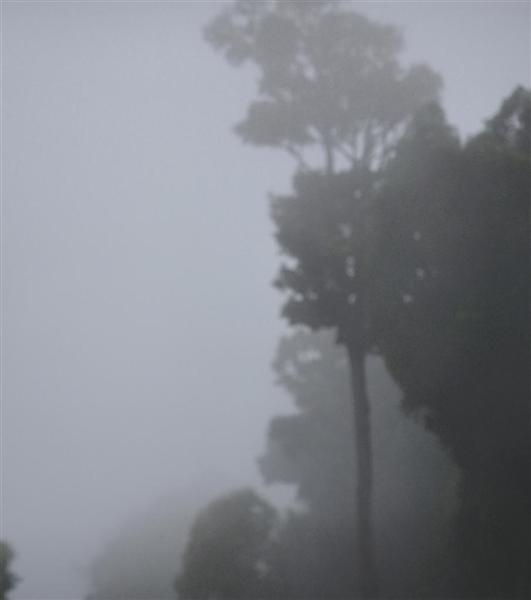 Darkwood no.24 image