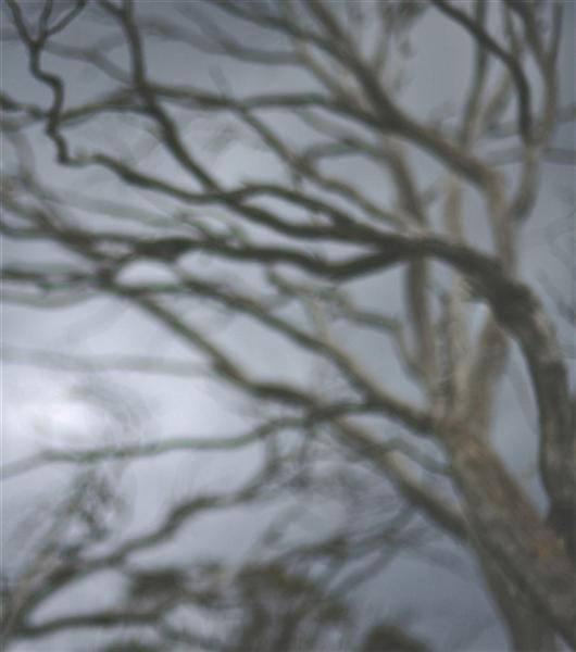 Darkwood no.25 image