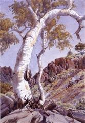 Ghost Gums, Central Australia image