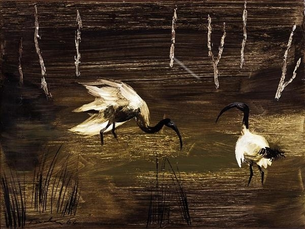 Ibis in Swamp image