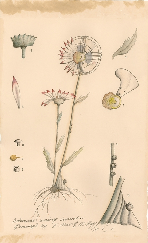 Michelle Day: How to Plant Flying Flora #2  image