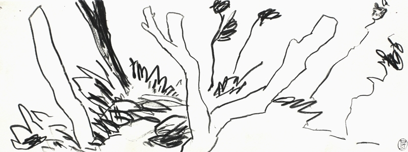 Rowen Matthews: Stump Field image