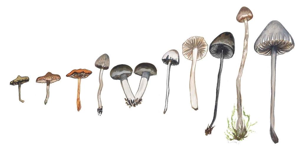 SCHROOMS image