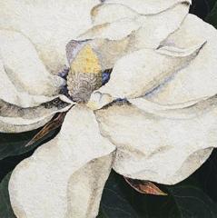 Magnolia georgiana 2014 after George Dionysius Ehret 1743   image