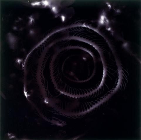 16/ Brown Snake image