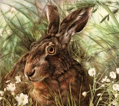 Brown Hare image