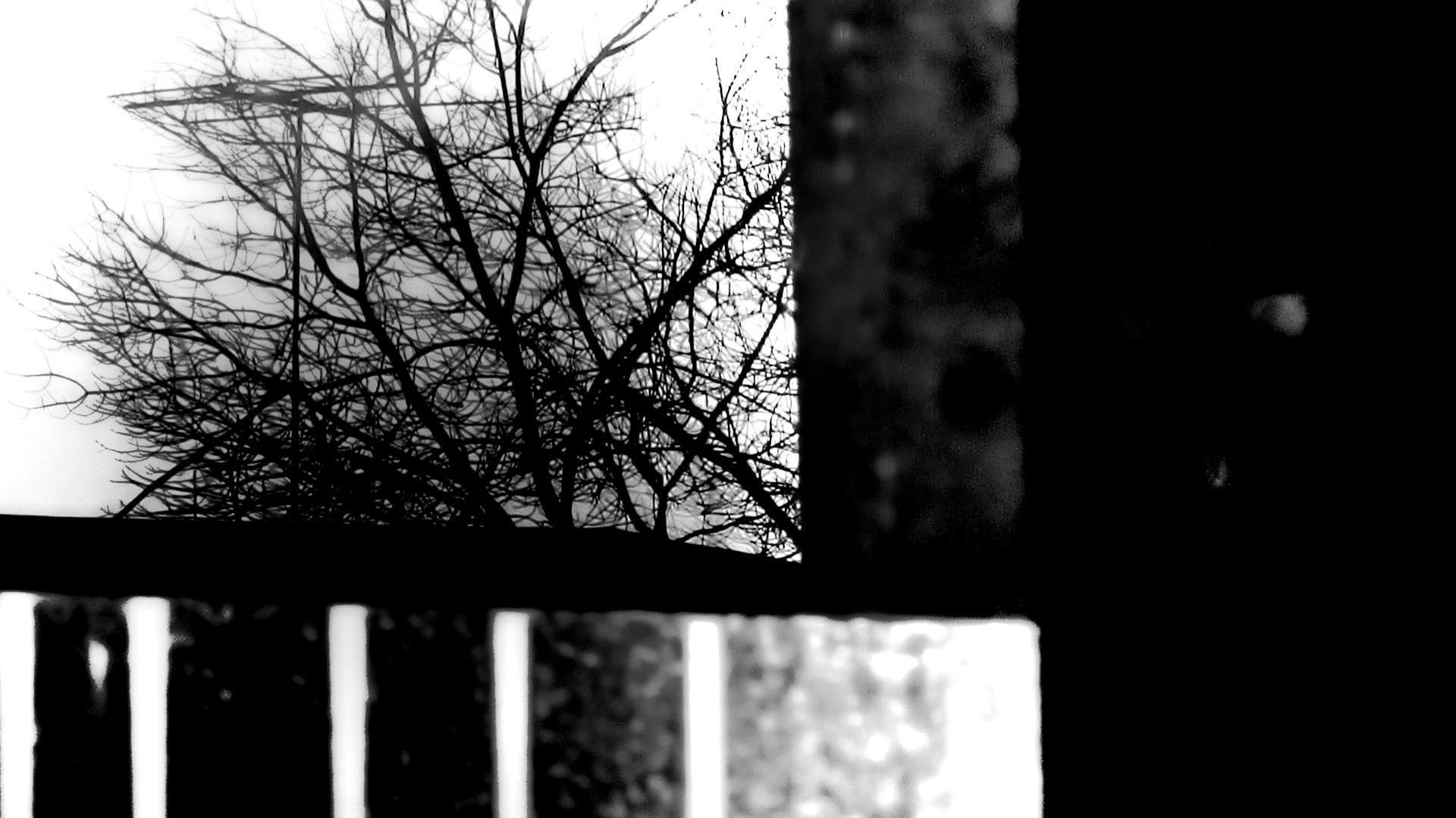 winter1 image