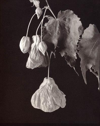 Chinese lantern image