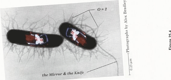 0 = 2: THE MIRROR & THE KNIFE image