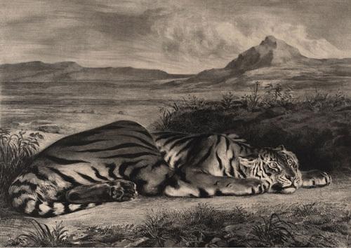 Royal tiger image