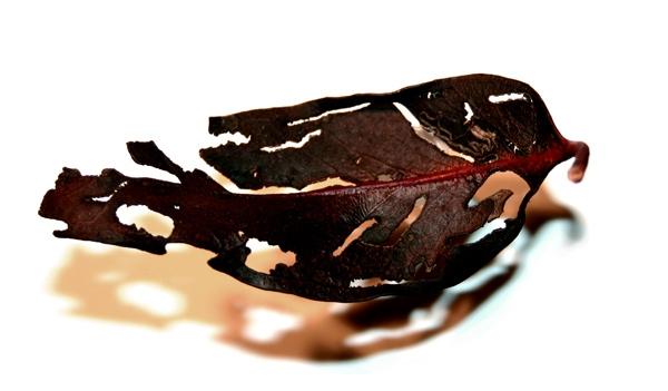 Black Leaf image