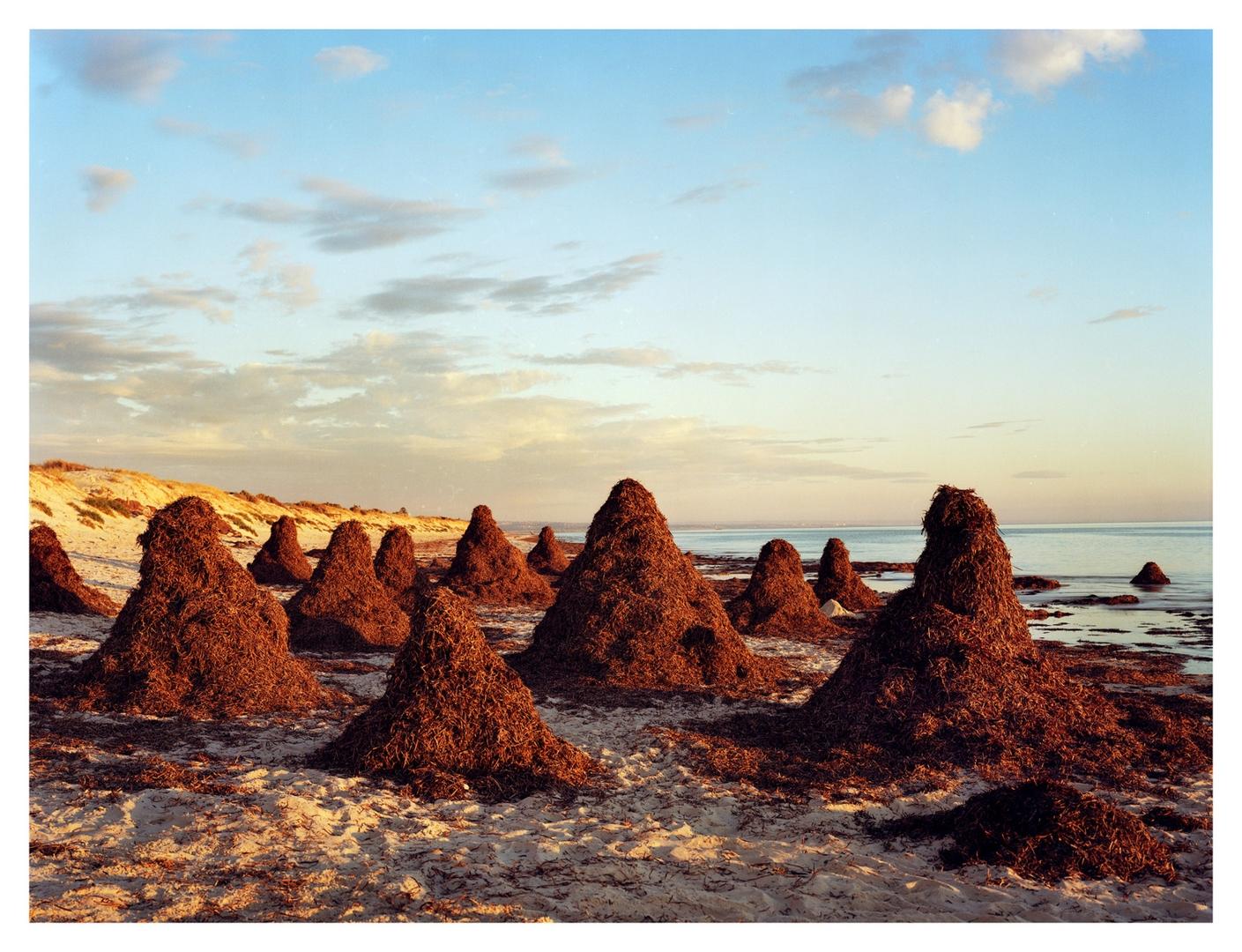 Seaweed Stacks image