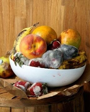 Old Fruit. 2010 image