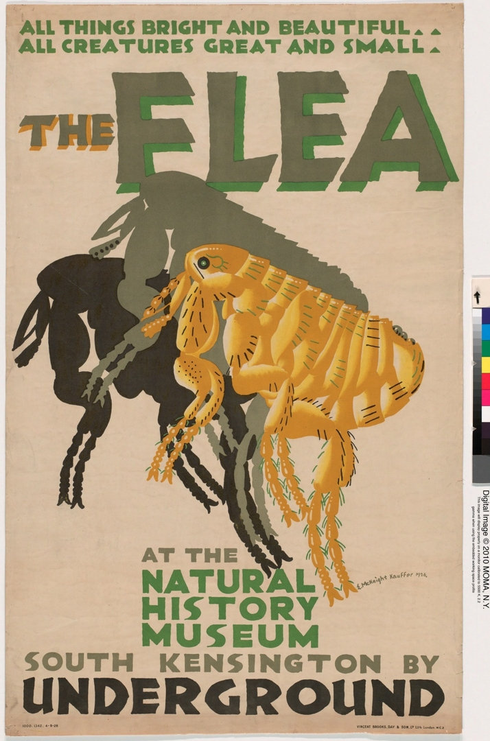 The Flea at the Natural History Museum. 1926. image