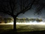 AdelaideNoir_fog image