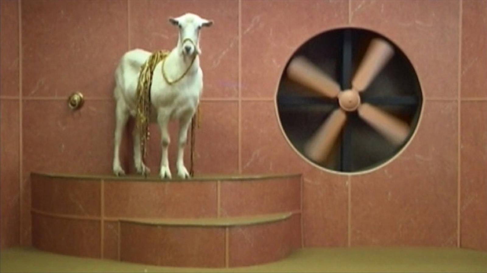 Goat Odyssey (still) 2006 image