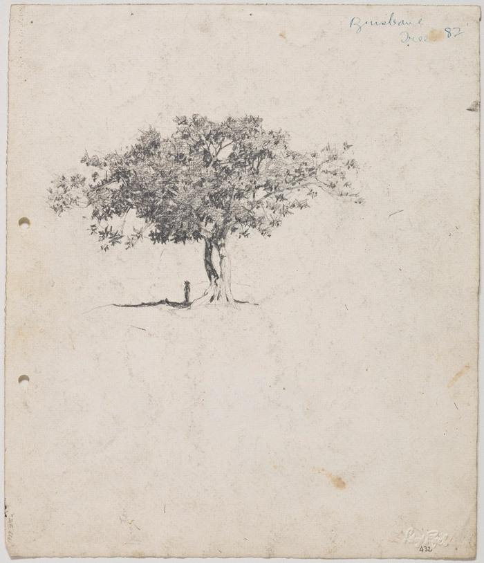 Moreton Bay Fig at Milton, figure under tree c.1912-17 image