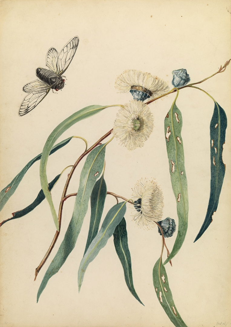 Study for gum-flowers and 'love' 1850 image