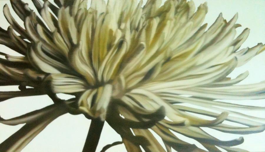 Chrysanthemum Glory image