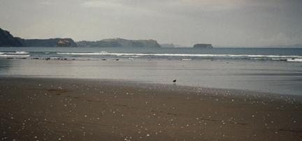 Der Vogel am Strand image