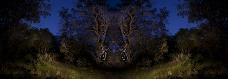 There is unrest in the forest; there is trouble in the trees #5 image