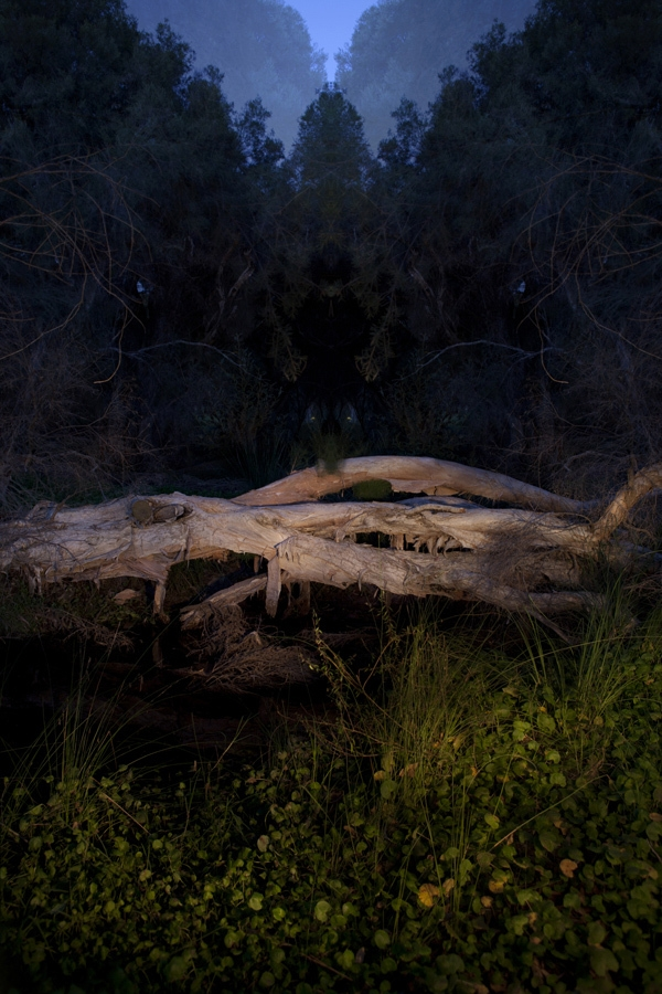 There is unrest in the forest; there is trouble in the trees #8 image