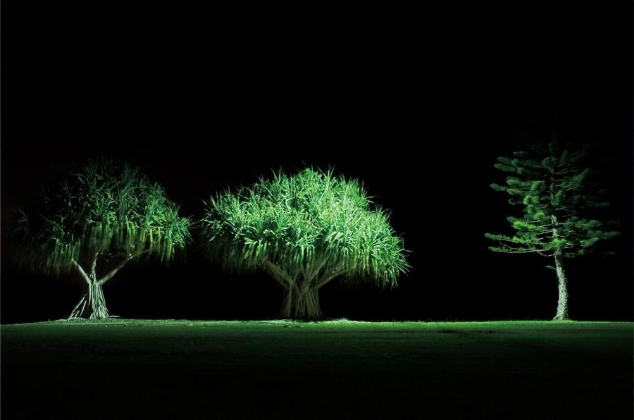 Three Trees image