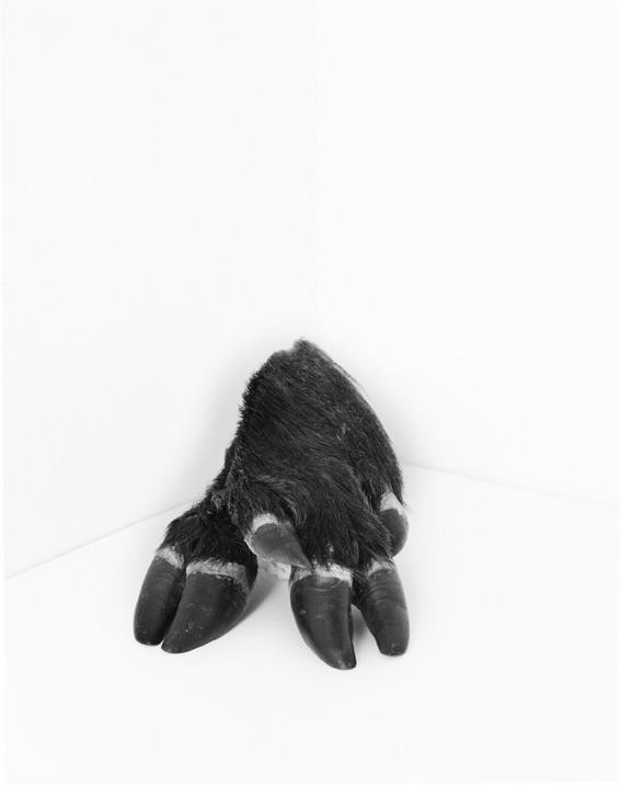 Cadaver image