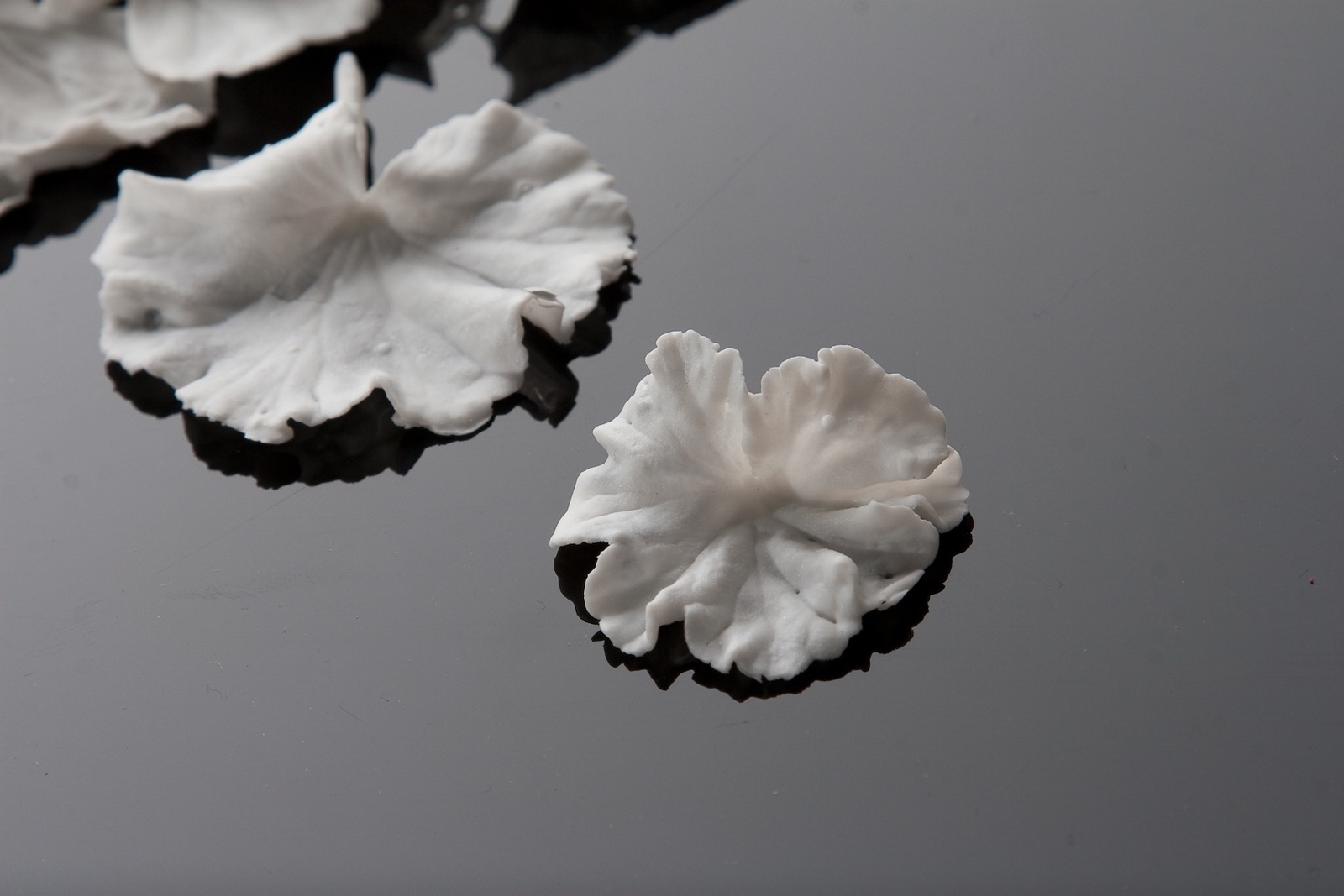 Crumbling Ecology, 2012. Hand made Porcelain, Installation Detail. image