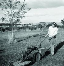 Sunday Mowing image