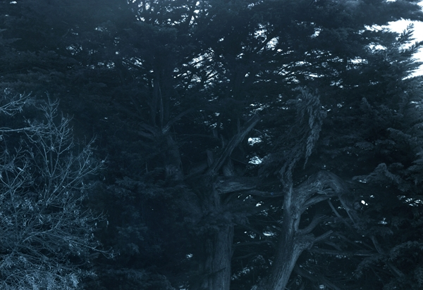 Untitled (dark trees) image