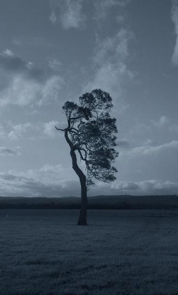 Untitled (lopsided tree) image