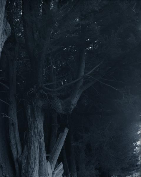 Untitled (trunks) image