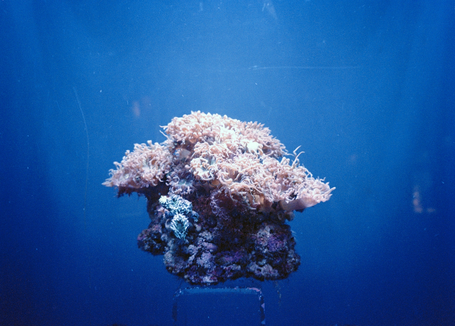Coral, from the series Light of Day  image