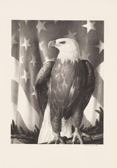 Bird of Freedom image