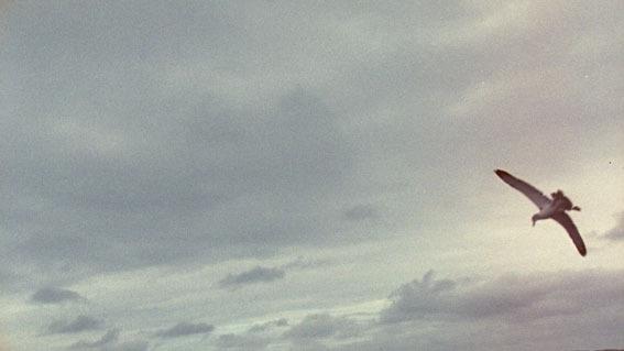 albatross (still) image