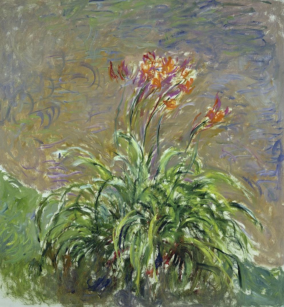 Daylilies (Les Hémérocalles) image