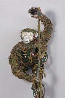 Pan troglodytes / chimpanzee image