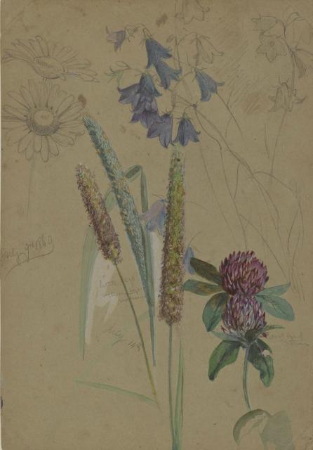 Flower Study, July 9-14  image