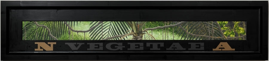 North American Vegetae image