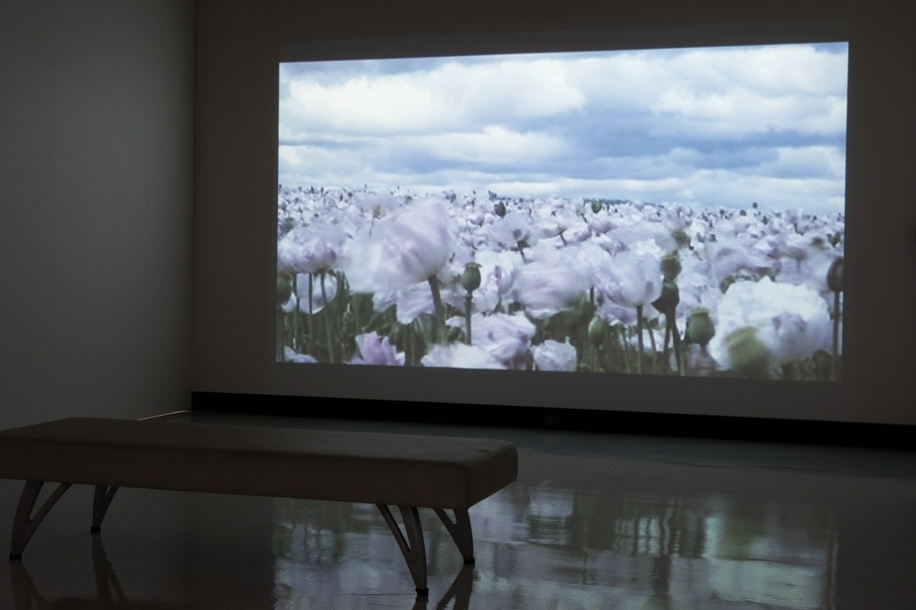 Fiona Foley, Bliss. 2006. Ghost Citizens: Witnessing the Intervention. Installation shot at Counihan Gallery in Brunswick image
