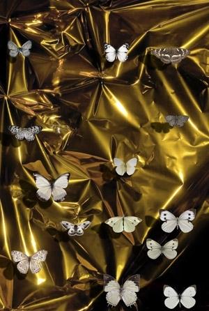 James McGRATH Gold Lacuna IV  2012 image