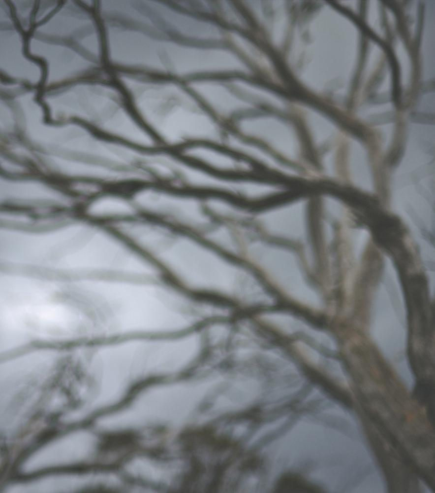 Darkwood no.25  2012 image