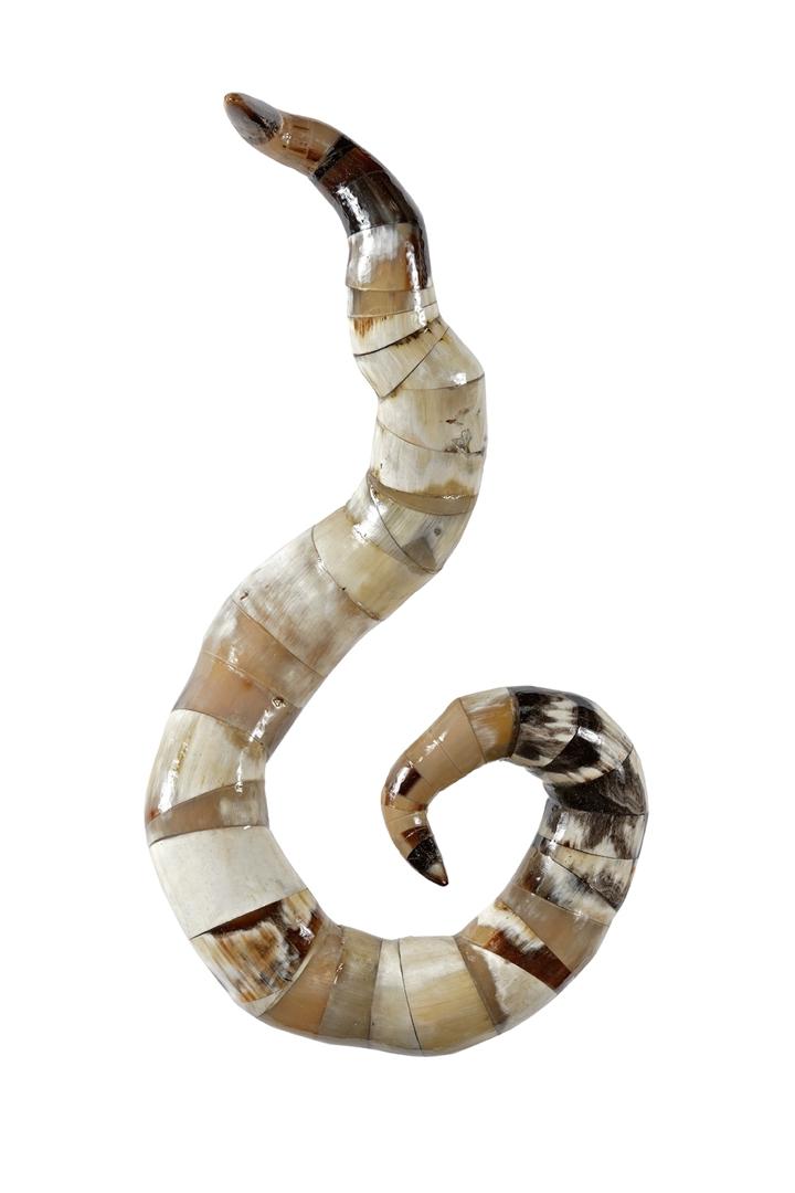 Spiralia I image