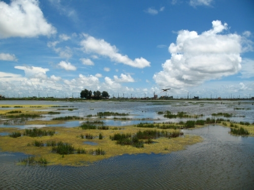 2015 Call for Proposals, Cheng Long Wetlands International Environmental Art Project  image